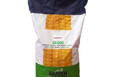 seminte-porumb-suporto-saaten-union-fao-290